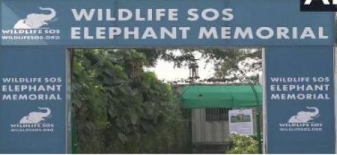 मथुरा में हाथियों के संरक्षण के लिए उठाया गया बड़ा कदम, मृत हाथियों की स्मृति में किया अनोखा काम