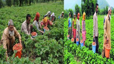 Jammu Kashmir: Good days for farmers, Modi government's new plan