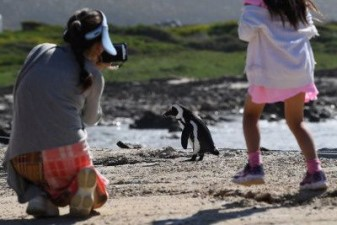 UP: Tourists away from wildlife parks due to Corona epidemic