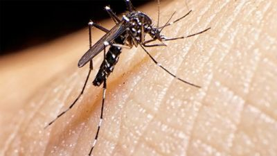Dengue, floods and rains increased troubles of Bihar, 150 cases so far