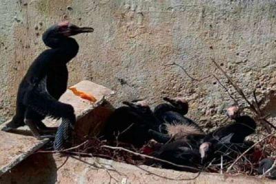 पेड़ काटने के बाद भी दो दिनों तक अपने टूटे हुए अंडों के पास बैठे रहे पक्षी, ठेकेदार पर दर्ज हुआ केस
