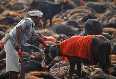PETA slams animal-birds sacrifice during Durga Puja in this state