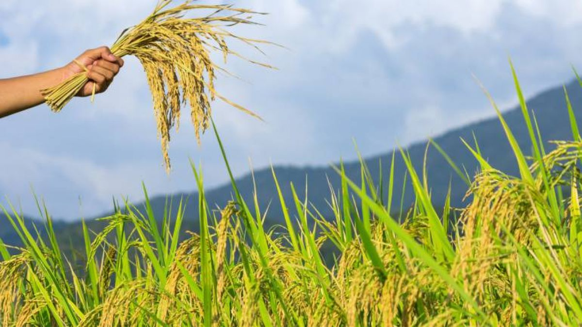 इस साल कम लागत में बम्पर कृषि उत्पादन की उम्मीद, ये है कारण