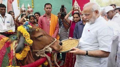 पशुधन गणना: मोदी राज में पशुधन में हुआ इजाफा, दर्ज हुई 18 प्रतिशत की बढ़ोतरी