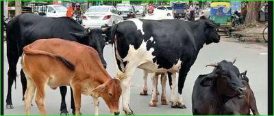 गोवा कचरा प्रबंधन मंत्री ने किया दावा, कहा- 'आवारा मवेशी 'मांसाहारी हो गए हैं'