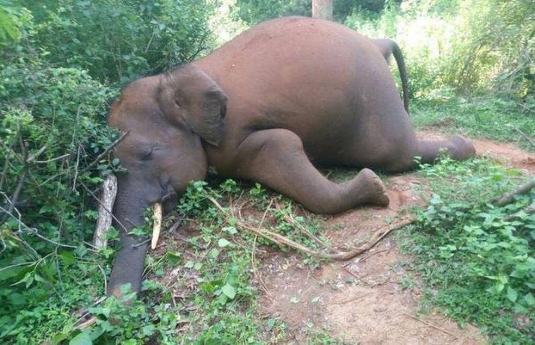 Virus terror strikes in Nandan Kanan, Odisha, stirred by the death of four elephants