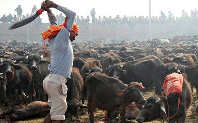 अब किसी भी मंदिर में नहीं दी जा सकेगी पशुबलि, हाई कोर्ट ने लगाई रोक