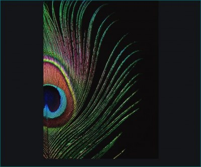 Peacock feather may resolve the problems from money to Vaastu dosha