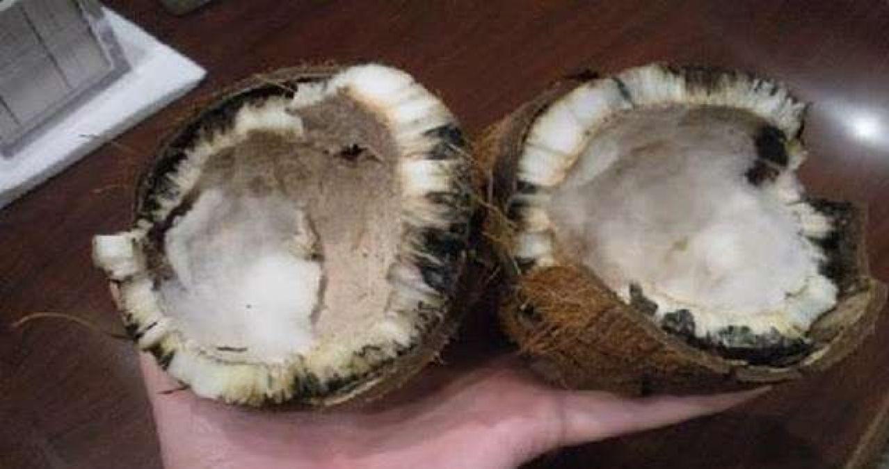 coconut 5d5a3ddd12386