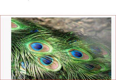 जन्माष्टमी पर घर के इस कोने में रख दें मोरपंख, मिले जाएगा कुबेर का खजाना