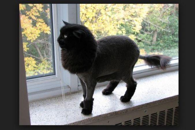 इस वजह से बिल्ली के रास्ता काटने को माना जाता है अपशकुन