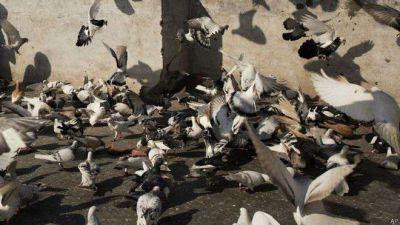 अगर आप भी डालते हैं पक्षियों को दाना तो पढ़ लें यह खबर वरना होगा बहुत बुरा