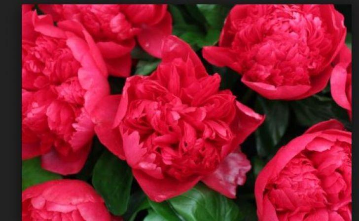 गरीबो और अविवाहितों का मसीहा है यह फूल, रख लें घर के इन कोने में