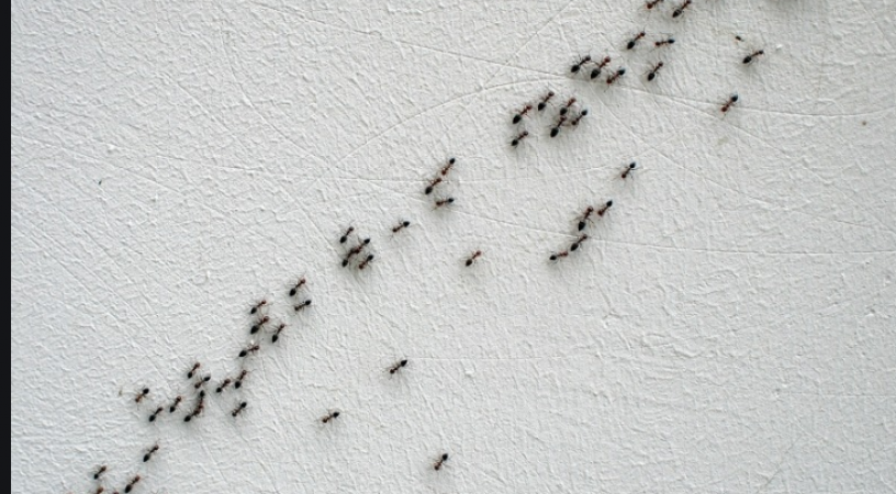 Ants Going Up Or Down In House Gives This Special Indication Newstrack English 1