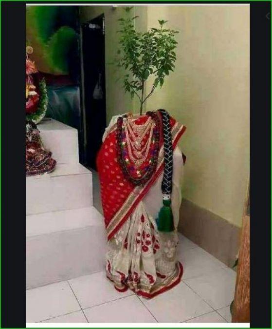माता तुलसी के पूजन में जरूर करें यह मधुर स्तुति और इन नामों का जाप