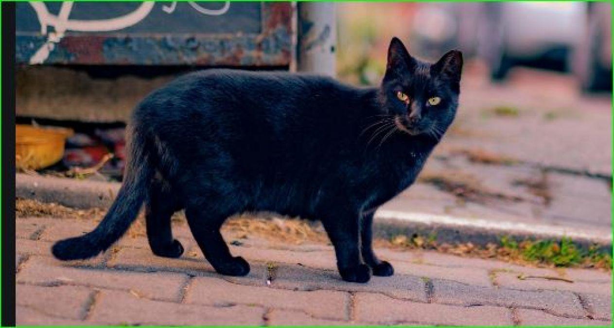 अगर आपके घर में भी बार-बार आती है बिल्ली तो हो जाइए सावधान
