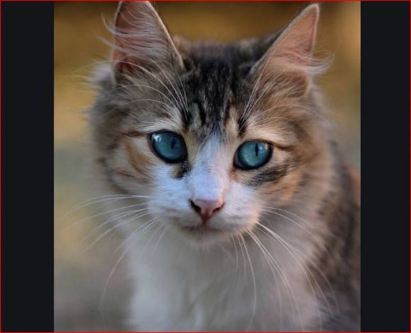 If a cat does excreta in your house, then good news is waiting for you