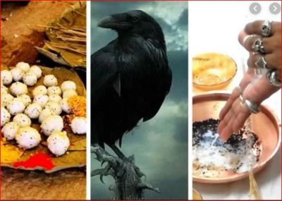 At the time of Shraadh, a crow gives auspicious and inauspicious signs; know more
