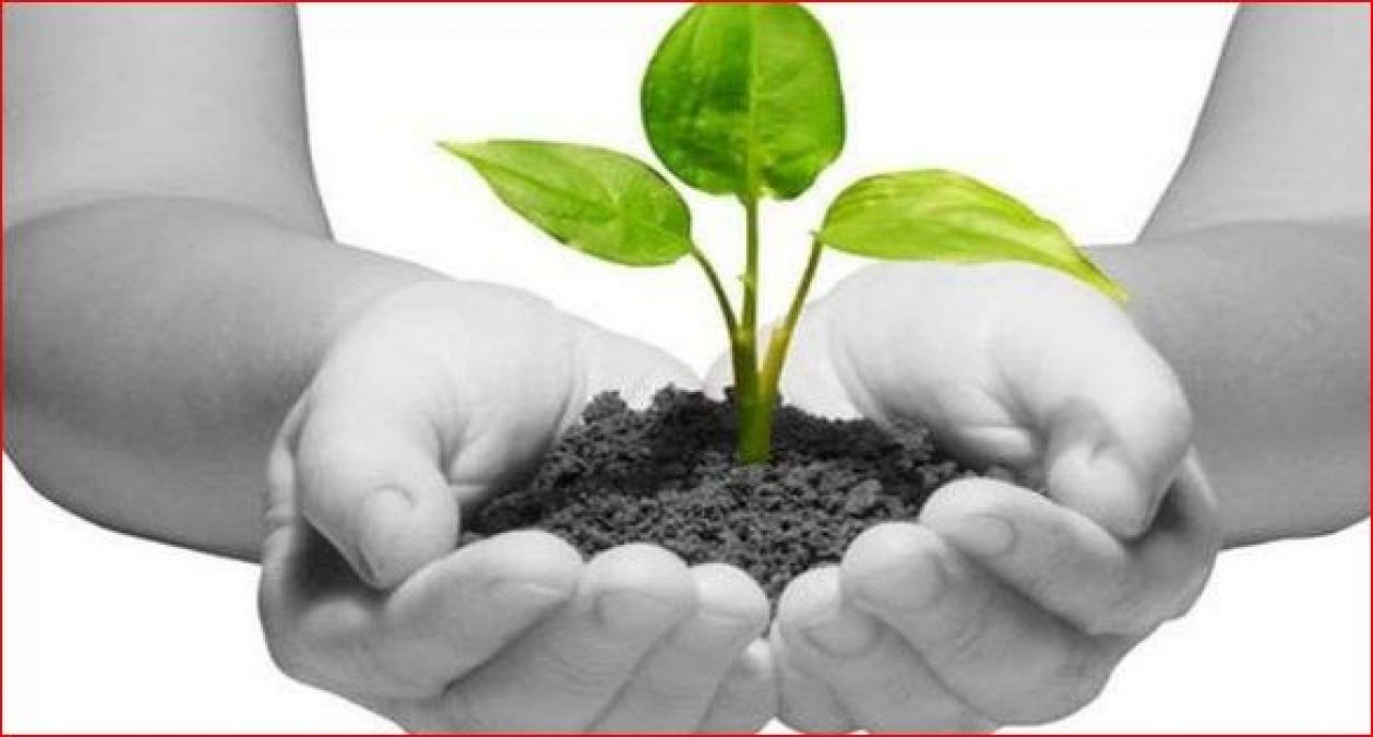 Plant this sacred plant in Pitrpaksha, your life will be blessed