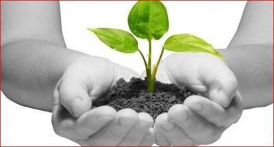 पितृपक्ष में लगाएं यह पवित्र पौधे, धन्य हो जाएगा आपका जीवन