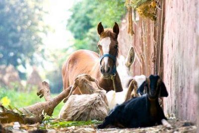 तीन आरोपियों ने पांच साल तक घोड़ी, बकरी, गाय-कुत्ते से बनाए संबंध, वीडियो भी बनाया