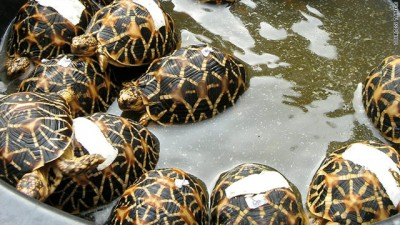Woman hiding 6 turtles in her bag caught by railway police