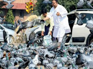 दिल्ली के एक कारोबारी को कबूतरों को दाना डालना पड़ा महँगा.....