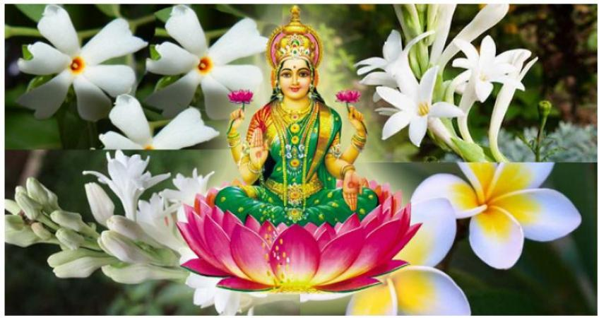 Just plant these flowers in your house courtyard will wipe out all the sorrows in your life