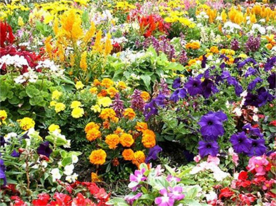 इन फूलो से रिश्ता ही नहीं किस्मत में भी आ सकता है बदलाव