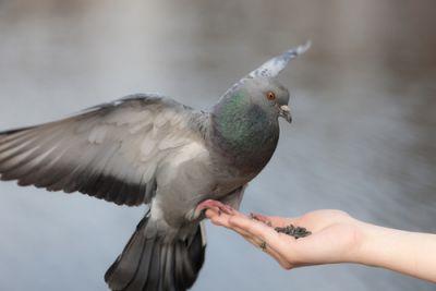 पक्षियों को अनाज खिलाने से दूर होते है ग्रहदोष