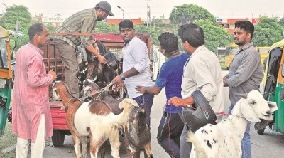 Bakrid: Know special thing related to this festival and sacrifice of goat