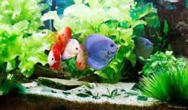 Know what are the benefits of keeping fish at home