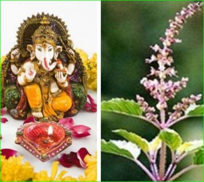 Tulsi wanted to marry Lord Ganesha but later cursed him of two marriages, know why