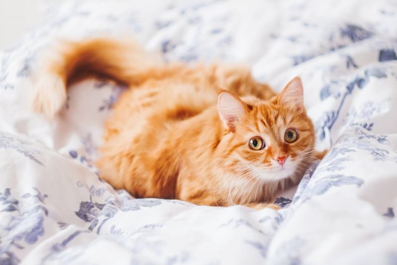 Woman asks for an orange cat, for a really sweet reason