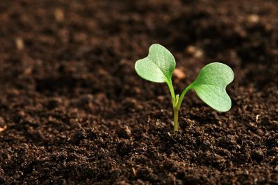 World Soil Day: 'Be the Solution to Soil Pollution'