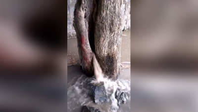 Miracle Of This 'Amazing Tree' Will Leave You Stunned