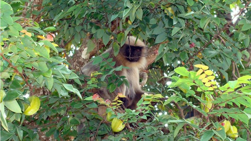 6 men killed and eat langur; telecaseted  live-stream of dreadful act on Facebook
