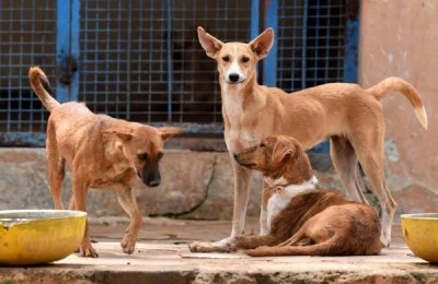 Wholesome moment! Varanasi Cop helps thirsty stray dog, photo surfaced