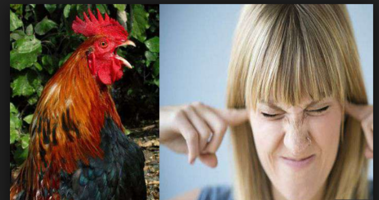 A rooster's crowing annoyed a woman; then woman action on it just amazed everyone