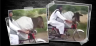 A man in Pakistan riding the bike while cow sitting in front; video goes viral
