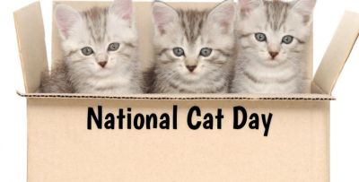 National Cat Day 2018- Lesser known facts about cats
