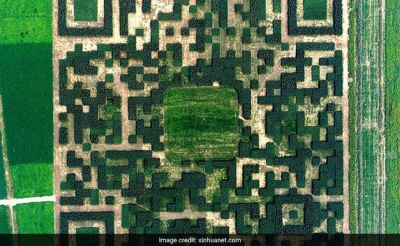 A large 'QR code' created with more than one lakh trees