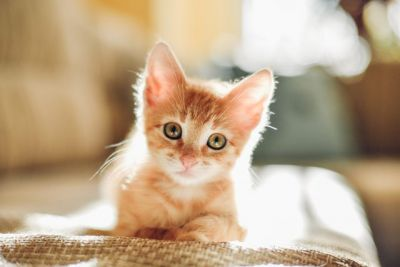 A cat lover? Then here are most popular cat breeds in India