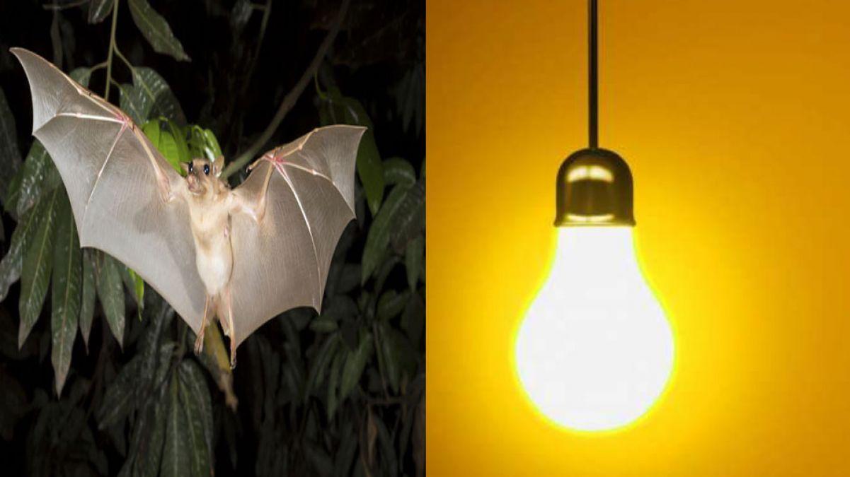 बिजली कटौती पर कमलनाथ के अफसर का बेतुका बयान, चमगादड़ों को बताया जिम्मेदार