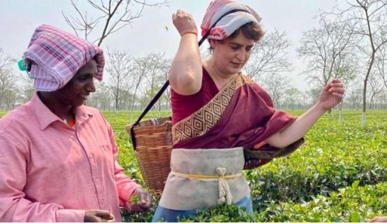 असम में महिलाओं के साथ चाय पत्ती तोड़ते नज़र आईं प्रियंका, कहा- जिम्मेदारी से वोट करें