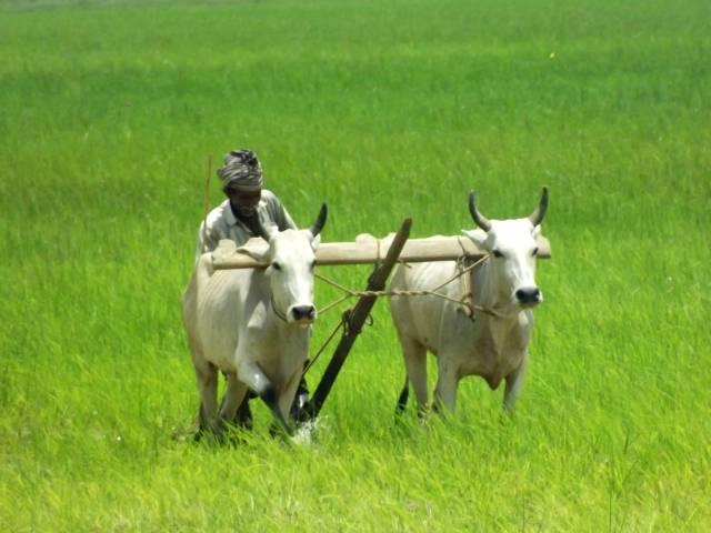 मध्य प्रदेश : किसानों की जमीन बचाने को राजगोपाल का उपवास शुरू
