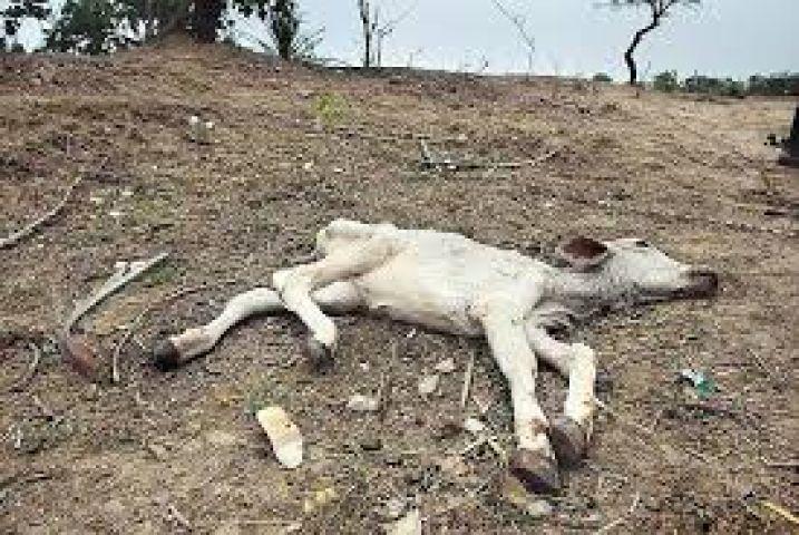 केवल मई माह में बुंदेलखंड में तीन लाख से अधिक जानवरों की मौत हो गई