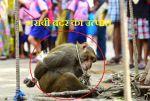 बंदर ने शराब पीकर मचाया उत्पात