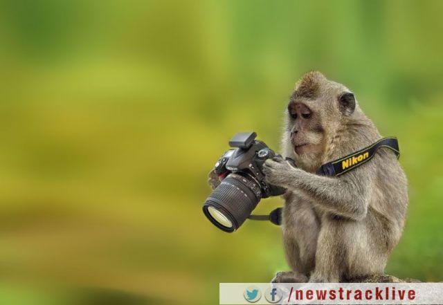 बंदरो की सेल्फीज पर कोर्ट का अनोखा फैसला