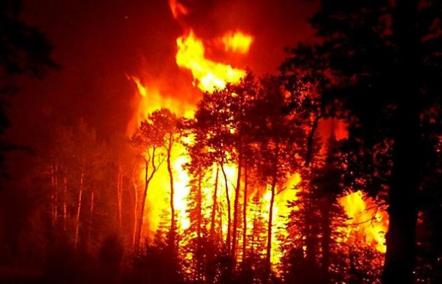 रूस में जंगल की आग में 15 खाक